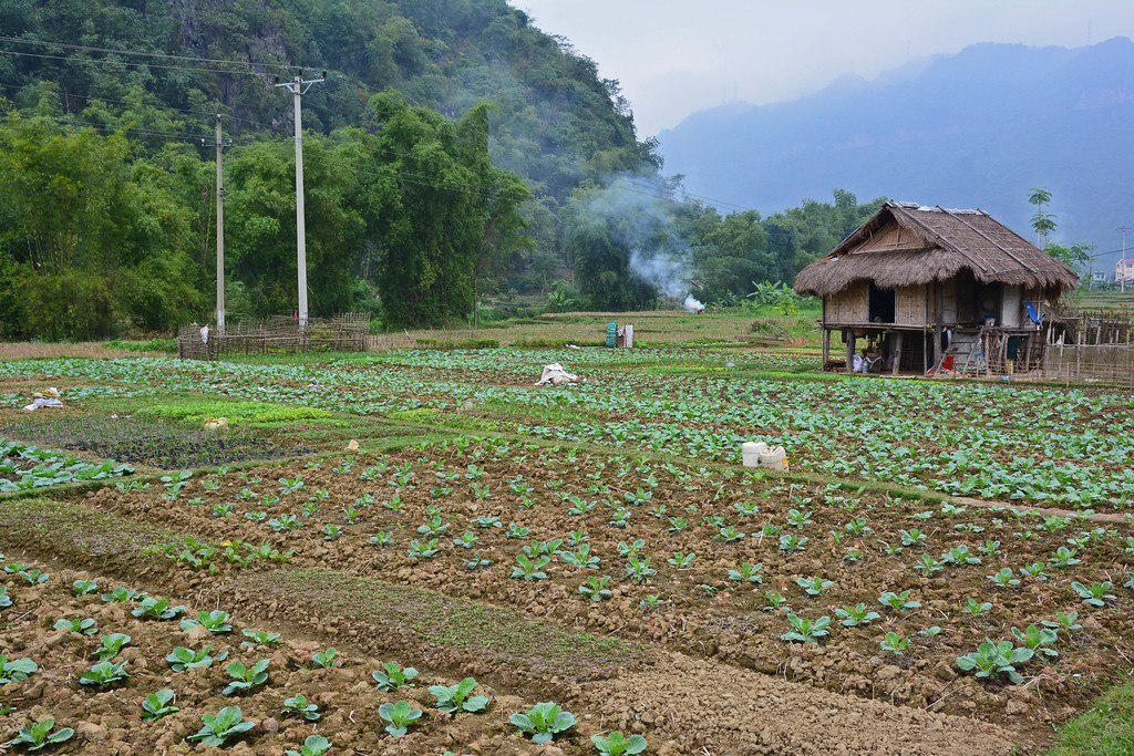 Mai Chau Villages